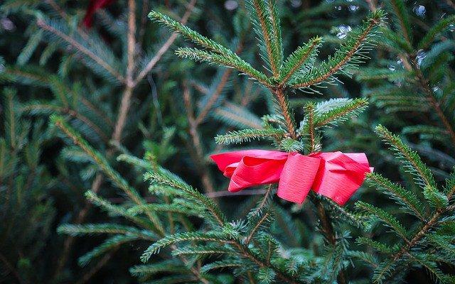 hofladen melder engelhorn tannenbaume