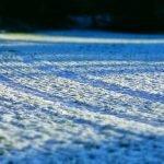 hofladen melder winteracker