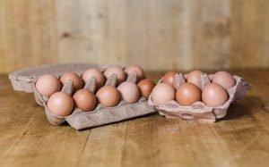 Eier Bodenlandhaltung