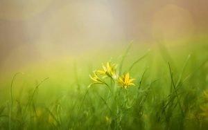 Hofladen Melder Frühlingserwachen
