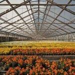 Das Bild zeigt ein mit Blumen gefülltes Gewächshaus.