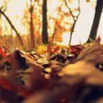Das Bild zeigt auf dem Waldboden liegende, heruntergefallene Blätter.